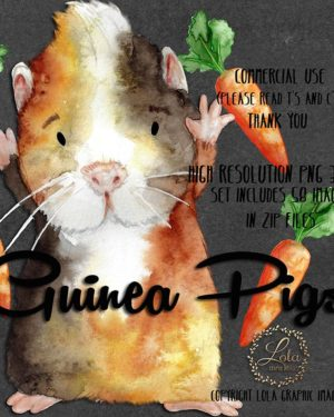 hand painted cute guinea pig