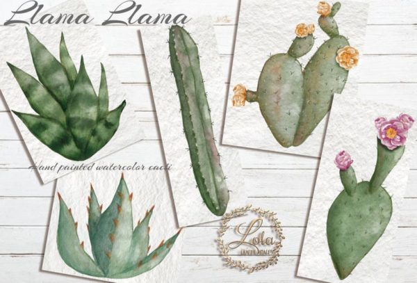 hand painted cactus clipart
