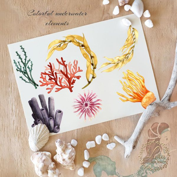 hand painted watercolor coral png